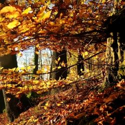 Goldener Wald 1