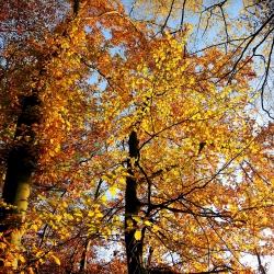 Goldener Wald 2